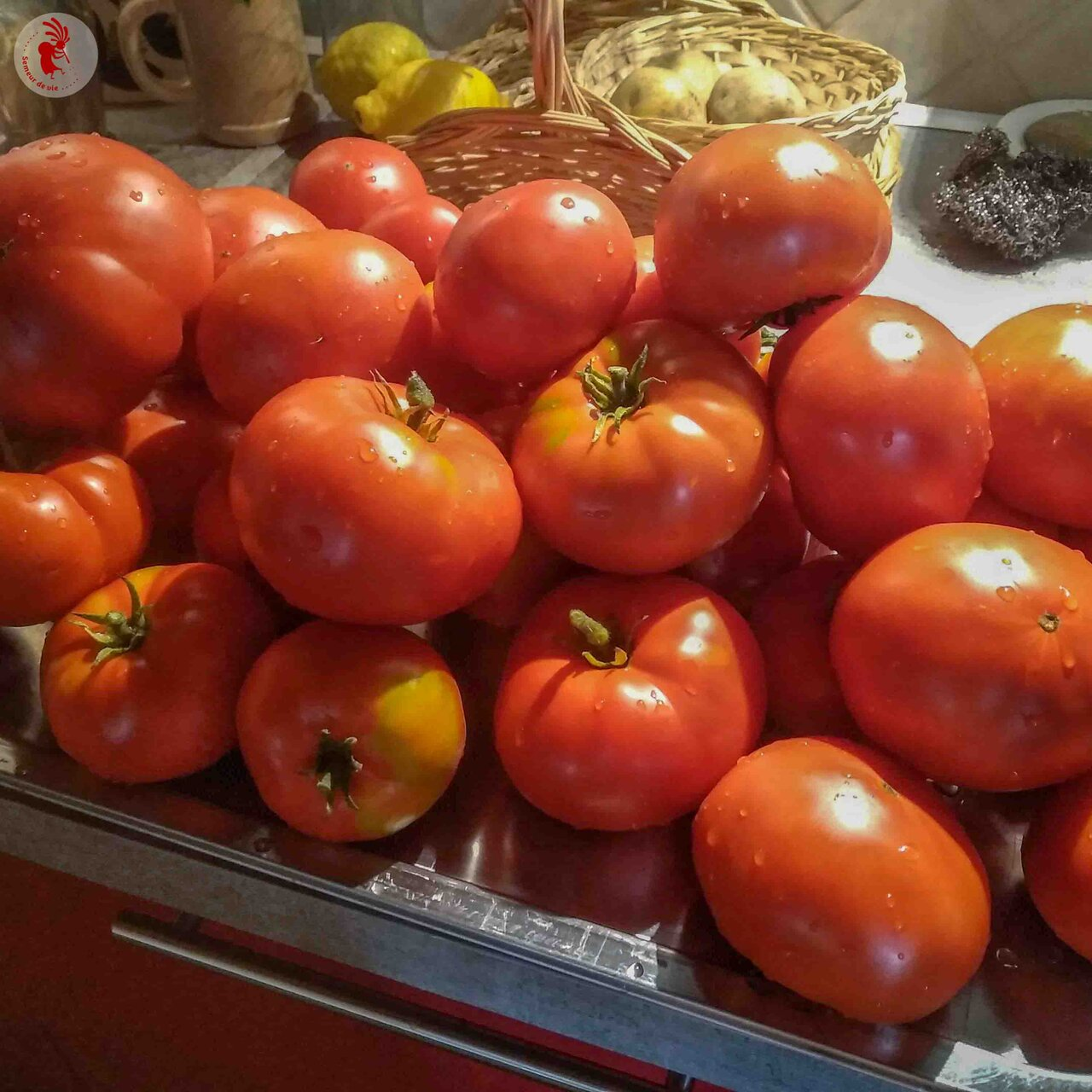 Tomates - Moskvich
