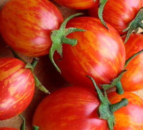 Tomates-Cerises - Pink Bumble Bee