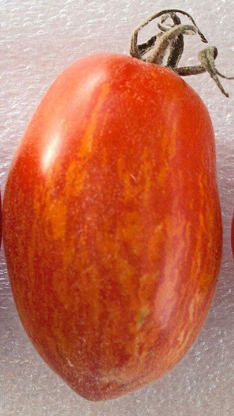 Tomates - Elberta Leeway