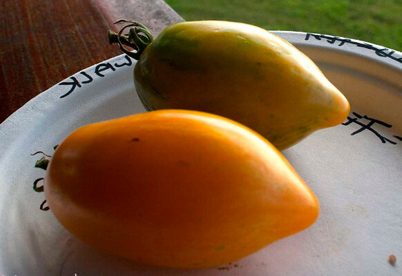 Tomates - Orange Walk