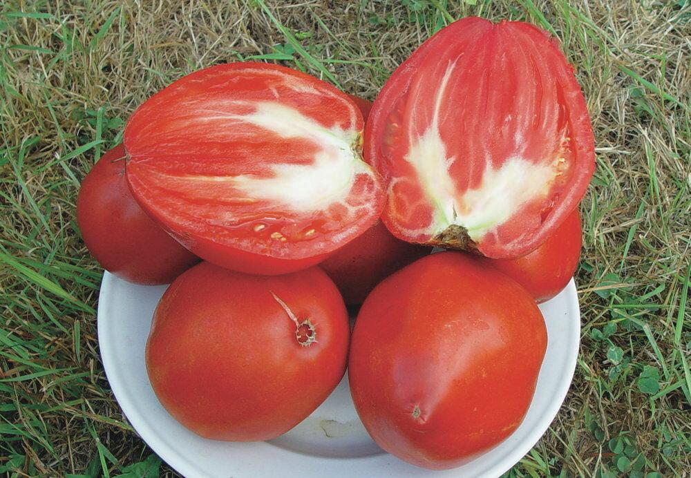 Tomates - Cœur de Bœuf Géant / Reif Red