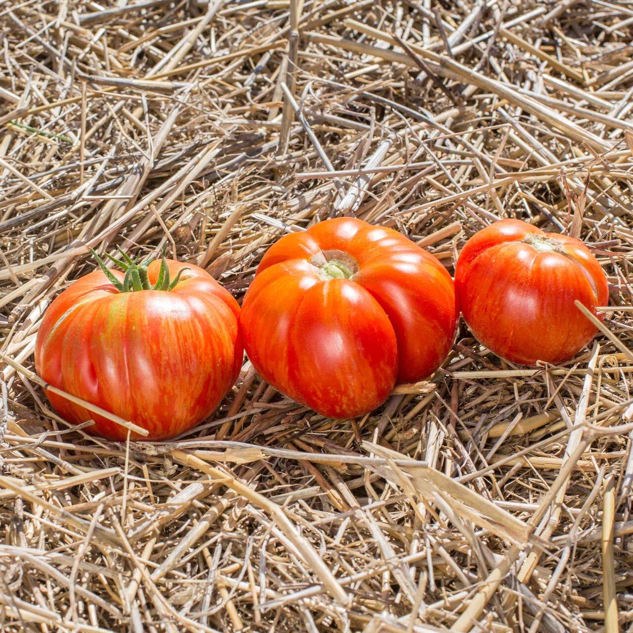Tomates - Solar Flare