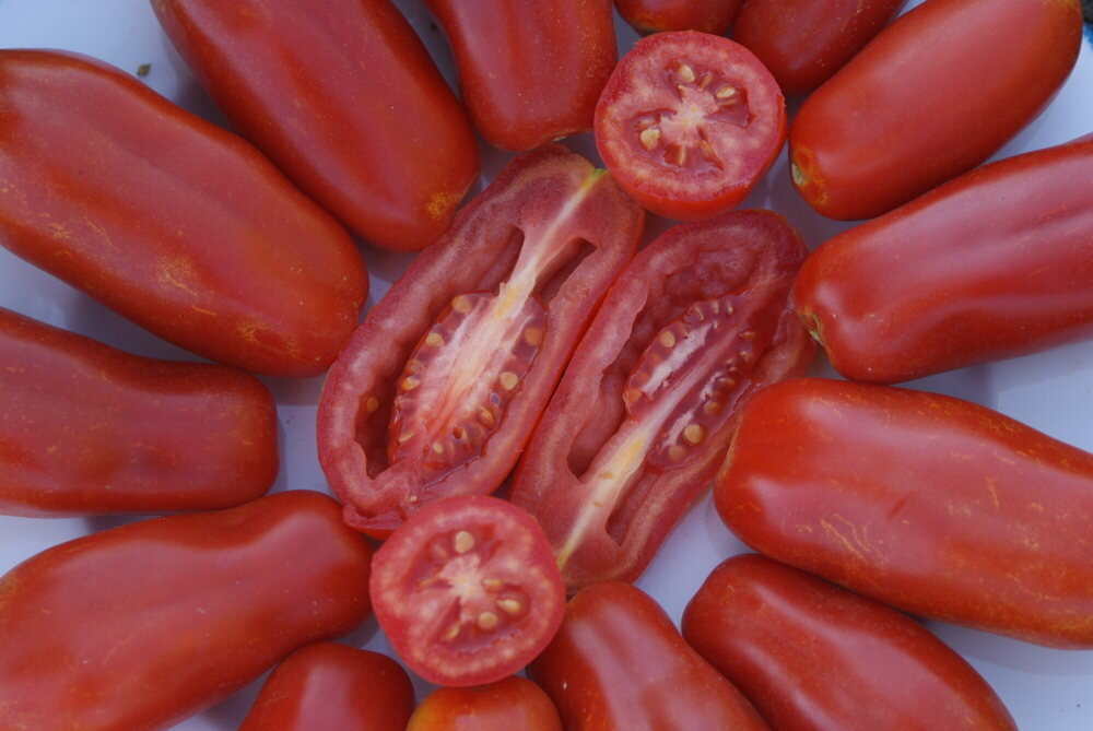 Tomates - San Marzano