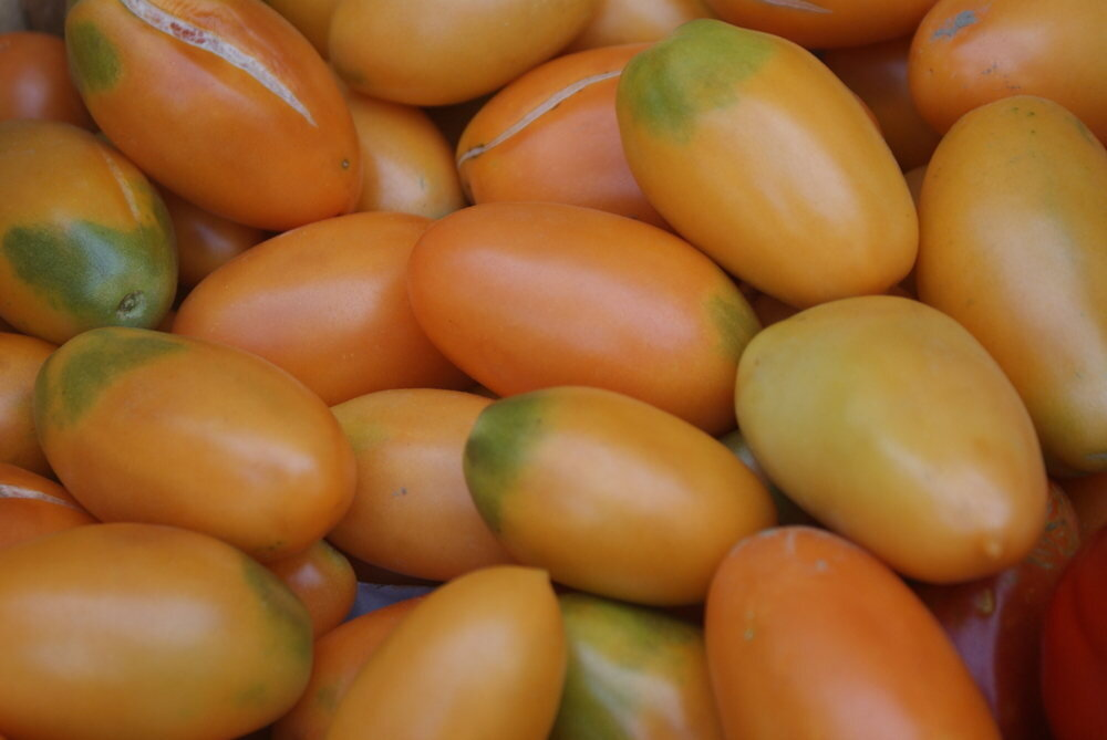 Tomates - Orange Banana