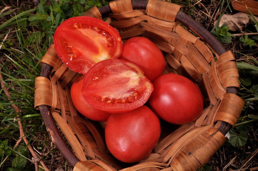 Tomates - Grushovka