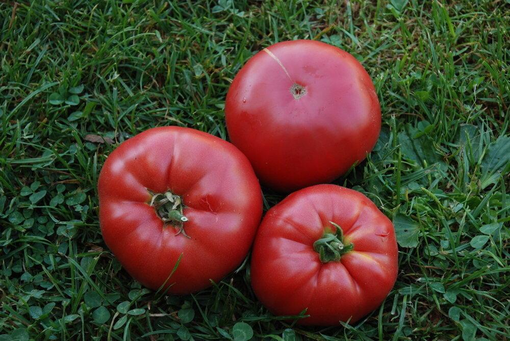 Tomates - Pruden's Purple
