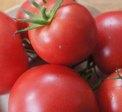 Tomates - Purple Perfect