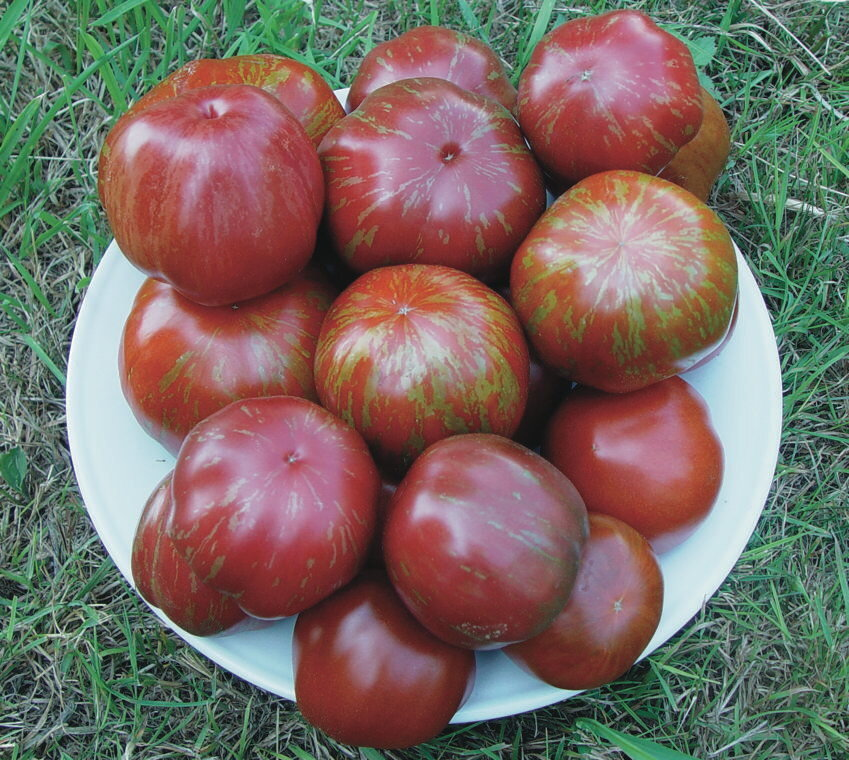 Tomates - Brown Flesh